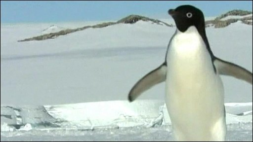 An emperor penguin in the Antarctic