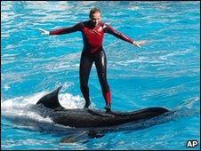 Trainer Dawn Brancheau stands on an unidentified whale while performing at SeaWorld Orlando (image from December 2005)