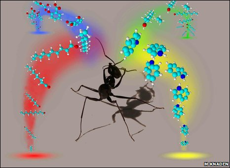 Graphical representation of an ant smelling odours