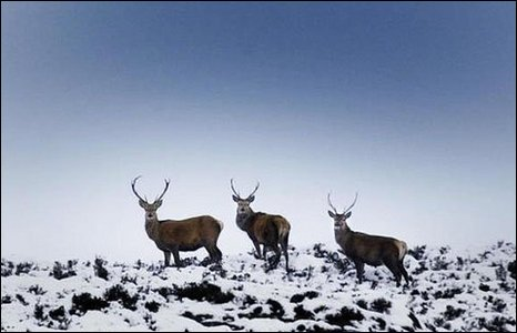 Deer on snow peak
