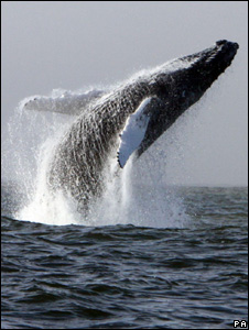 Humpback whale (Image: PA)