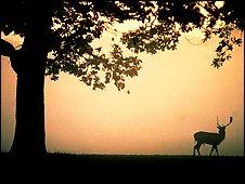 Deer in Nottinghamshire
