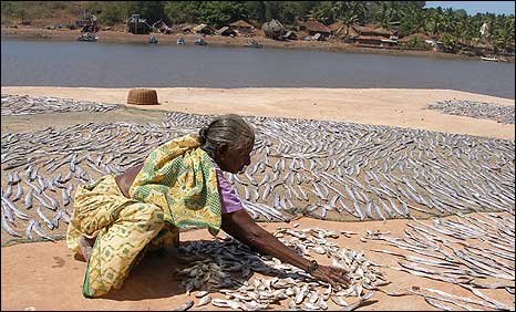 Fisherwoman in the Konkan coastal region