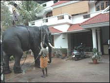 Domesticated elephant in Kerala