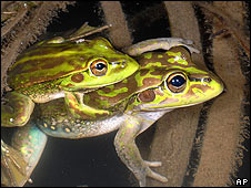 Yellow spotted frog