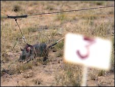 A rat at work detecting mines