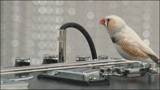 Bird orchestra