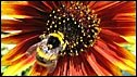 A bumble bee - or drumbledrone