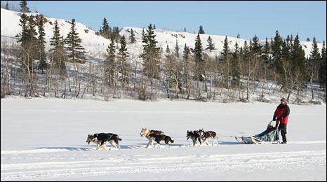 Dogsledding in Yukon