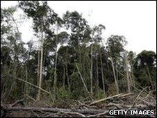 Damaged rainforest