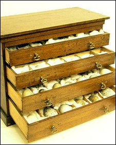 Bird eggs in cabinet up for auction