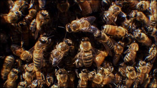 Honeybees in the nest