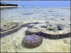 Coral reef in Zanzibar, Tanzania
