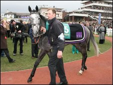 Horse being led around the parade ring at Cheltenham