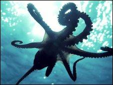 http://newsimg.bbc.co.uk/media/images/47494000/jpg/_47494240_octopus1.jpg