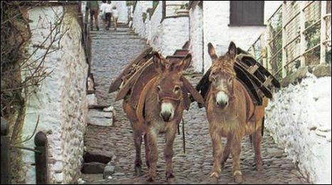 Donkeys in Clovelly