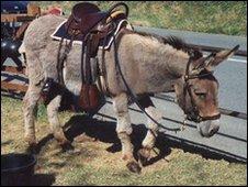 Oscar the donkey