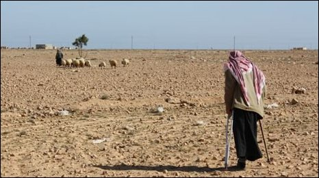 A man with a missing limb tends to sheep in the desert