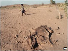 dead cattle during drought in India