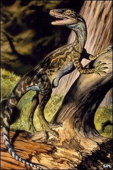 Staurikosaurus (SPL)