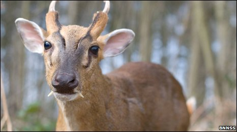 Belgian rangers busted for exotic deer moneymaker