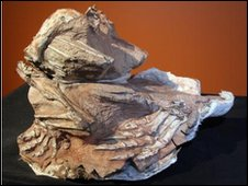 Seitaad ruessi fossil (Utah Museum of Natural History, University of Utah)