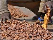 cocoa beans drying in the sun