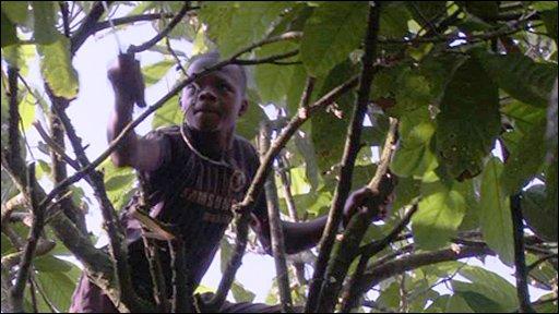 Fatao cocoa farming