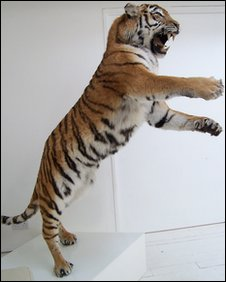 The stuffed tiger seized by police