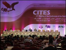 A general view shows the conference of the UN-backed Convention on International Trade in Endangered Species (CITES)