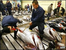 Fishmongers check the quality of meat on large tuna fish at Tokyo's Tsukiji fish market