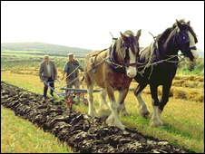 Manx ploughing at Cregneash (Pic: Manx National Heritage)