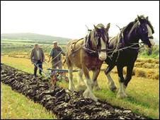 Manx ploughing at Cregneash (Pic: Manx National Heritage)