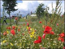 Summer wildflowers at the Millennium Park