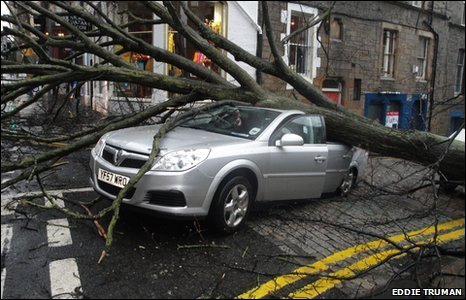 tree on car taken by Eddie Truman
