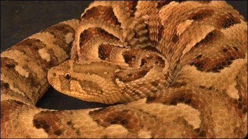 A dangerous snake