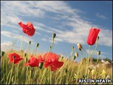 Poppies at Blackstone, by Justin Heath