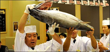 Tuna at auction