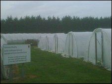A quarantine centre for cocoa plants