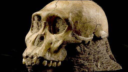Australopithecus sediba skull (Brett Eloff)