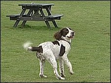 Dog in park (generic)