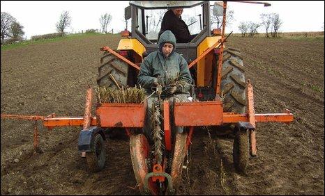 Planting time at Bryngwyn in Powys
