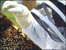 Beekeeping demonstration