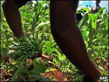 Kenya farm workers