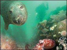 Underwater life in the Skomer Marine Nature Reserve
