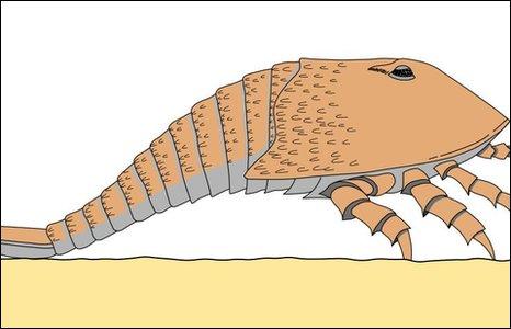 Artist's impression of Hibbertopterus
