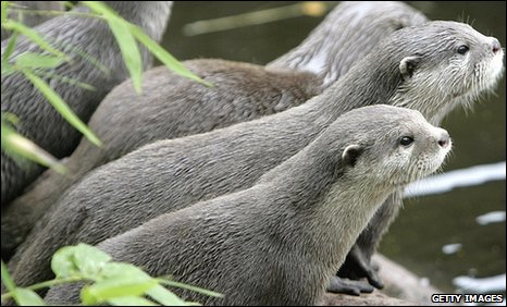 Otters (generic)
