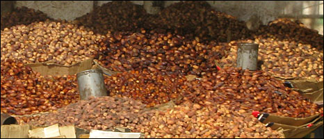 Dates for sale in Khartoum