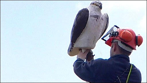Polystyrene model of osprey being attached