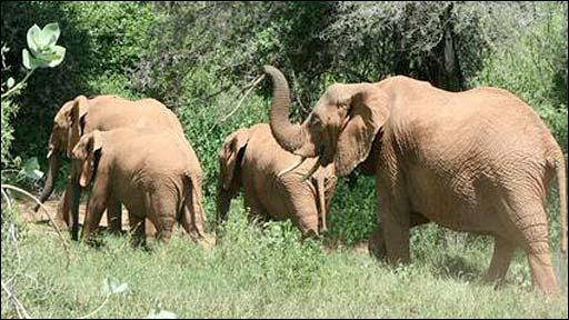 Elephants flee (Lucy King, Oxford University)